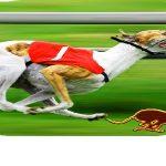 Klađenje na utrke pasa